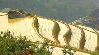 A vacation among the rice terraces of Ping