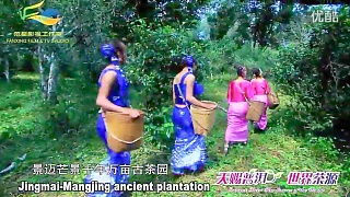 Video : China : Pu'Er 普洱 National Park, plus local customs and tea culture