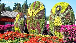 The BeiJing Botanical Gardens 北京植物园