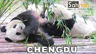 China 中国 trip - fun-loving pandas in ChengDu, LeShan Giant Buddha, ChongQing and Mount Emei