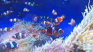Video : China : Ocean Park, Hong Kong 香港