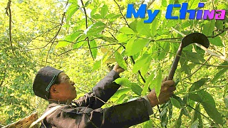 A Miao herbal medicine man in GuiZhou 贵州 - documentary